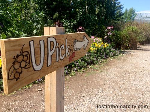 Cherry Picking Sign at Saskatoon Farm