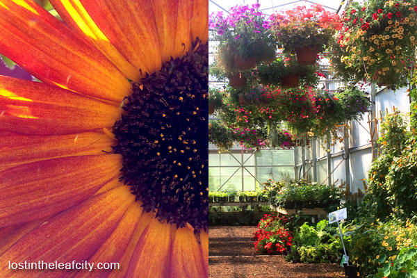 Flowers at Saskatoon Farm