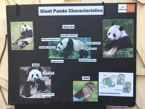 Panda Characteristics