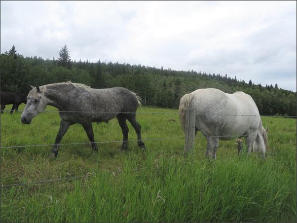 Horses at Mount St. Francis Retreat Centre